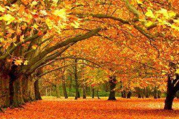 Romantic Fall Date Ideas